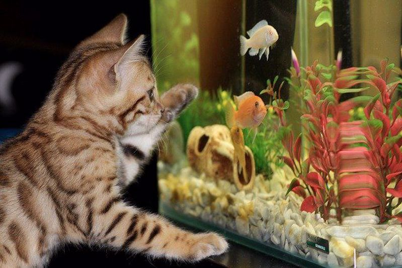 Fish Keeping for Beginners